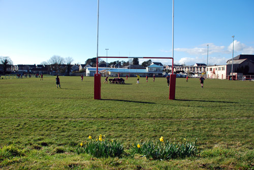 daffodils-and-goalposts